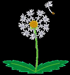 flower_wataboushi